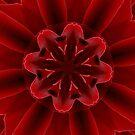 Red Rose Petals Kaleidoscope by Barbara A Lane