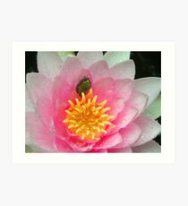 Froglet in a Blossom Art Print
