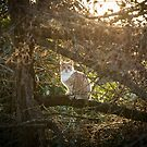 Cat in a Tree by Northline