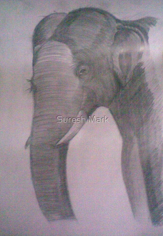 Art - Elephant by Suresh Mark