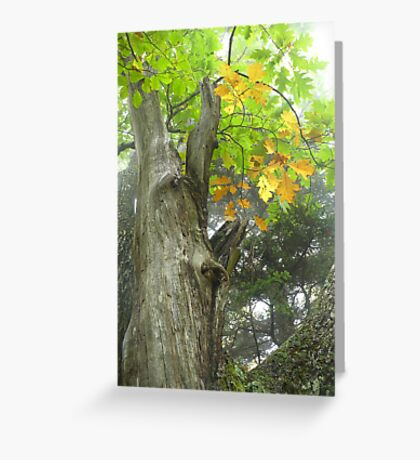 Autumn Crown Greeting Card