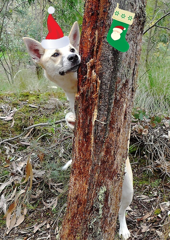 """Bush Christmas - """"Is that Santa coming through the forest?"""" by Meg Hart"""