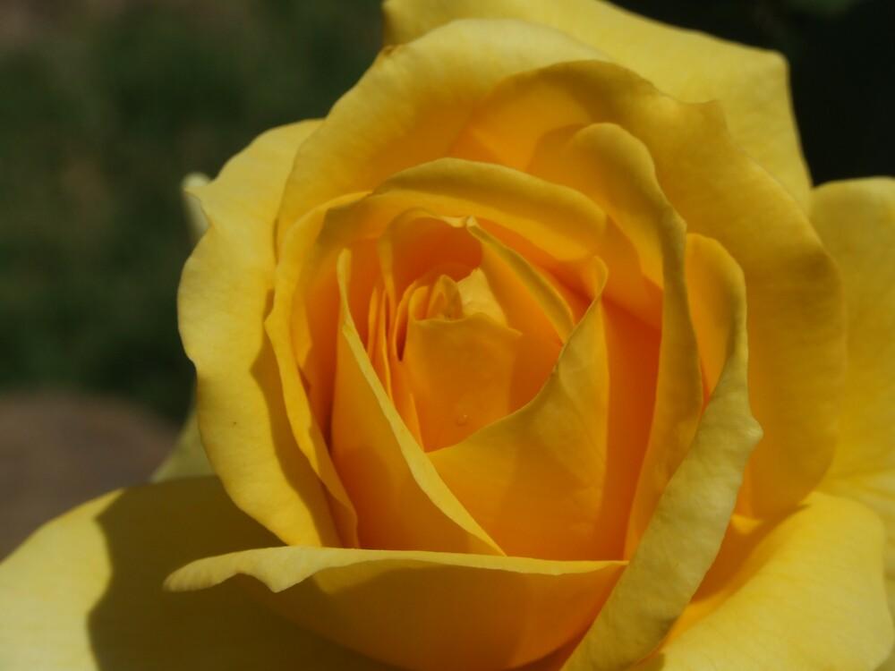 Sunshine by Linda Sass