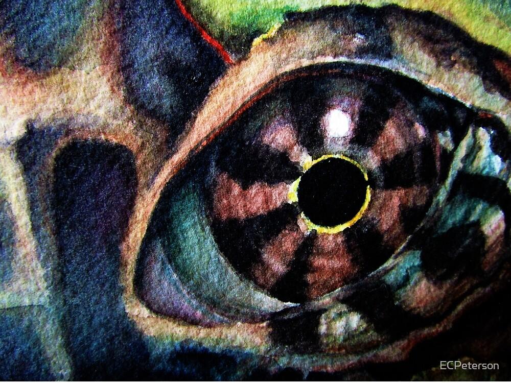 Augen 6 by ECPeterson