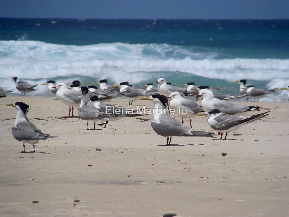Birds on the beach by Elena Martinello