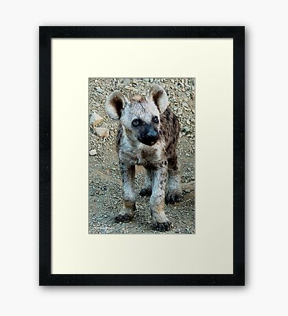 CUTE LITTLE BABY HYAENA - *Spotted Hyaena - Crocuta crocuta* Framed Print