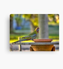 A Changeling in HDR Canvas Print