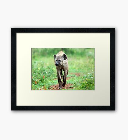 ON A MISSION STRAIGHT TO ME - *Spotted Hyaena - Crocuta crocuta* Framed Print