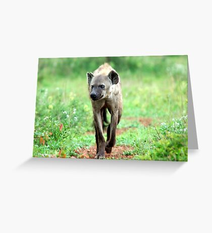 ON A MISSION STRAIGHT TO ME - *Spotted Hyaena - Crocuta crocuta* Greeting Card