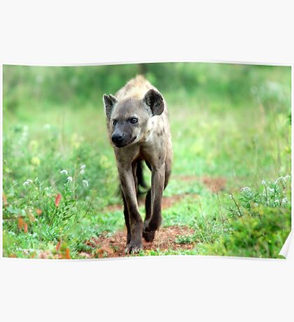 ON A MISSION STRAIGHT TO ME - *Spotted Hyaena - Crocuta crocuta* Poster