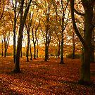 Autumn Colours by Stuart  Milton
