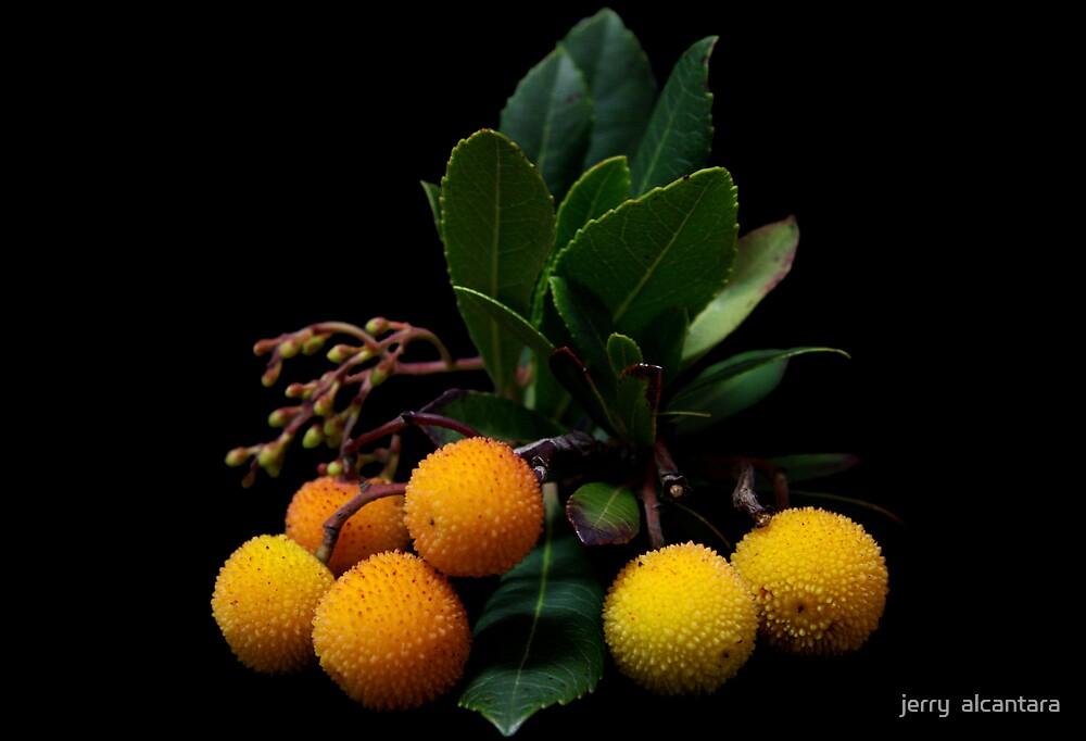 Yellow Berries by jerry  alcantara
