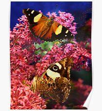 Merideth Butterflies Poster