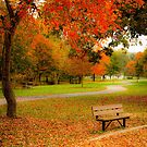 Lineberger Park 8 by Rodney Lee Williams