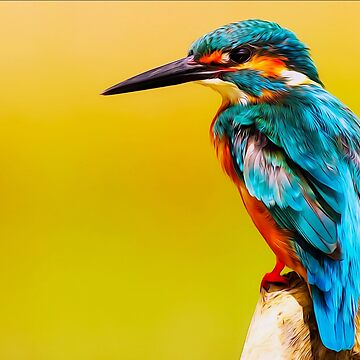 kingfisher, bird, wildlife by bhpshop