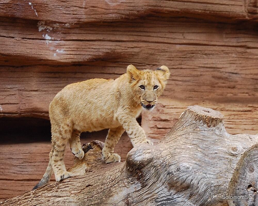 Lion Cub by SolomomSC