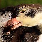 First Feathers by Jo Nijenhuis