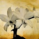 Fine Art Print Orchid by Kgphotographics