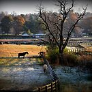 Frosty Morning, Kentucky Horse Park by John Carey