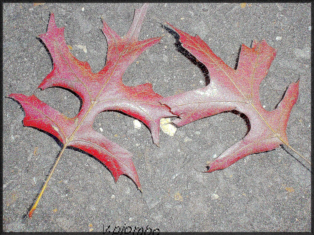 leaf series I by vpiombo