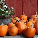 Pumpkins Galore by DMWilliams