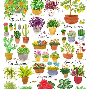 Here are some Pot Plants! by lillylotus