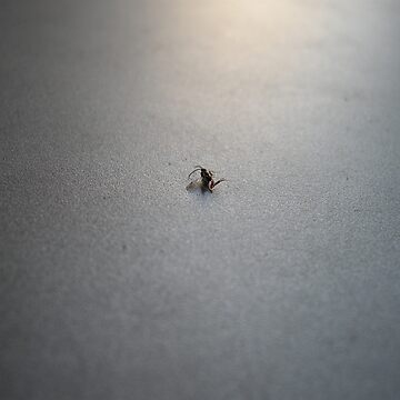 Lost Insect by Wazuki
