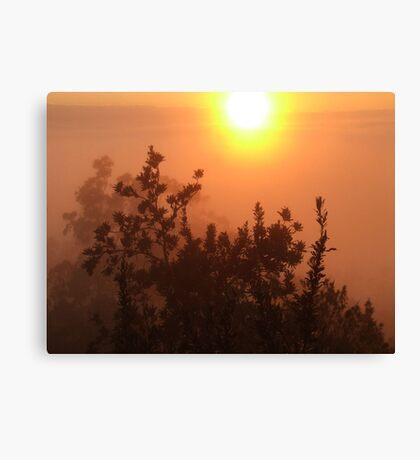 """Apricot Mist"" Canvas Print"