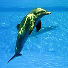 68 - DOLPHIN AT BARCELONA ZOO - DAVE EDWARDS - 2008 by BLYTHPHOTO