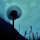 September blues by DanielaVphotos