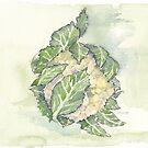 Köstlicher Blumenkohl - botanisch von Maree Clarkson