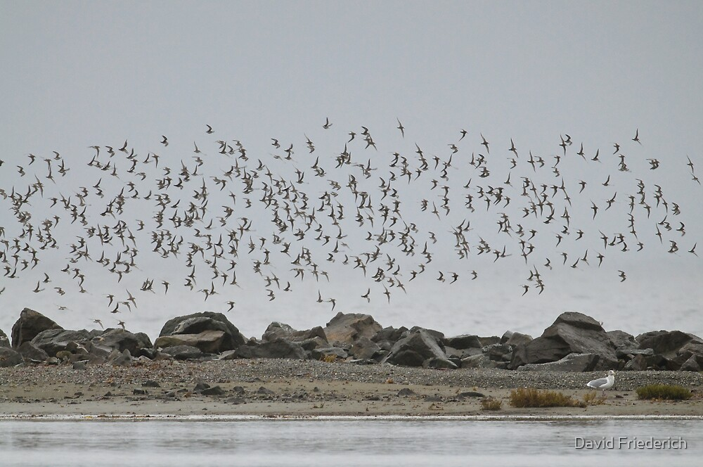 Great Migrations by David Friederich