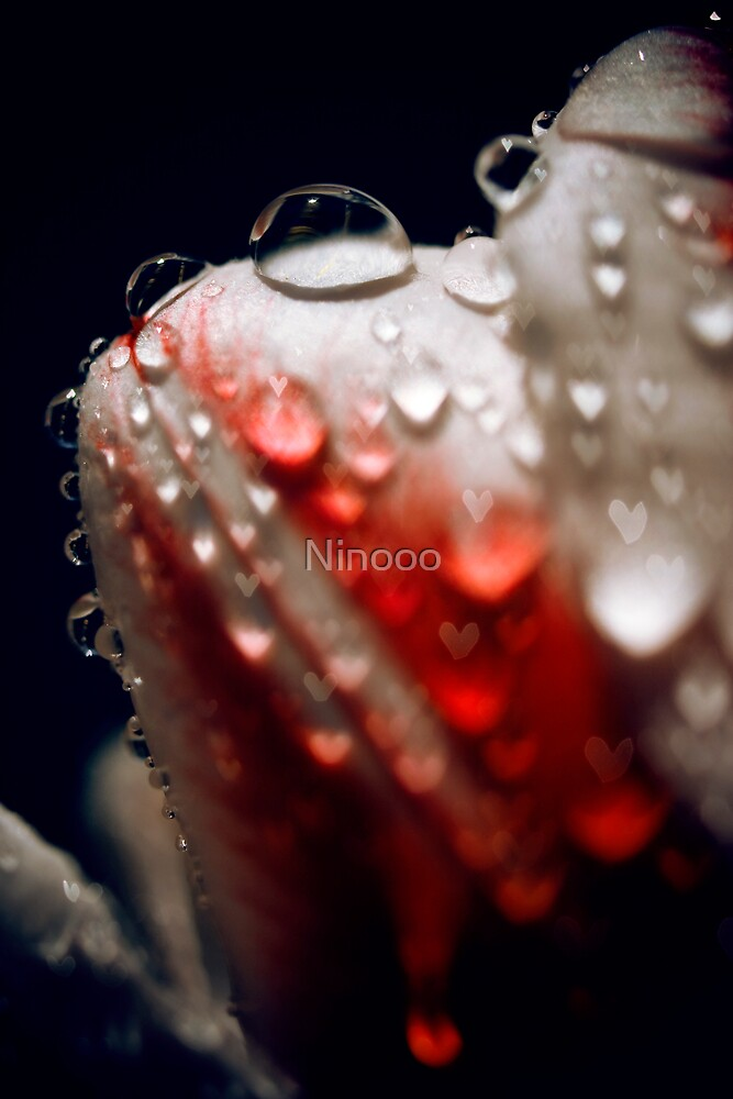 Tulip1 by Ninooo