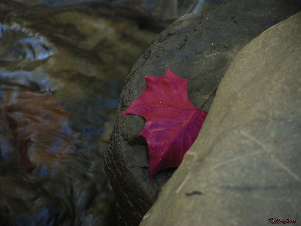 A Red Leaf  by kelleybear