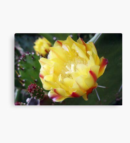 Cactus, the Flower Canvas Print