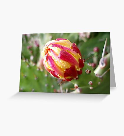 Cactus, the flower bud Greeting Card