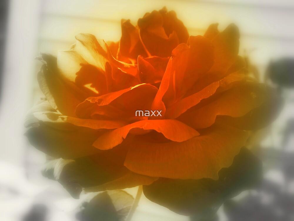 pretty rose by maxx