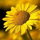 Hot in the Sun by Joy Watson