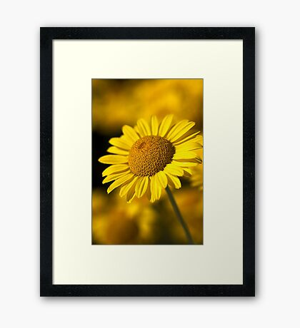 Hot in the Sun Framed Print