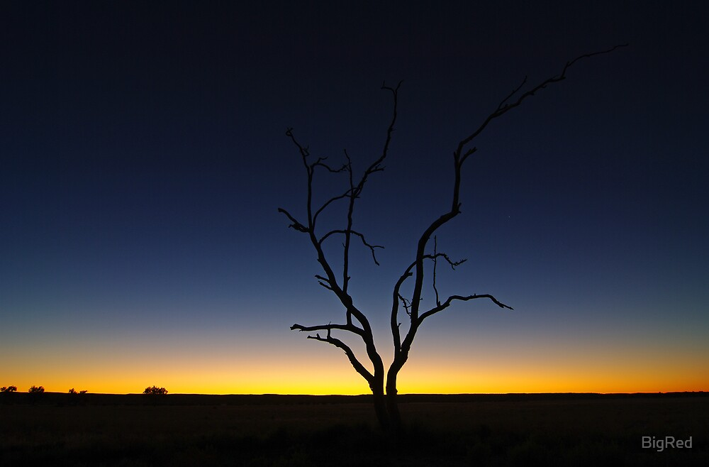 tree sunrise by BigRed
