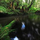 Salmon River - Togari by phillip wise