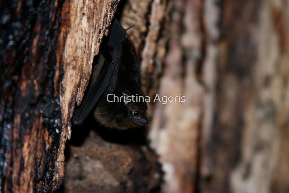 Bat by Christina Agoris