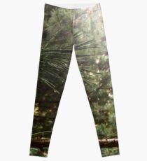 Pine Leggings