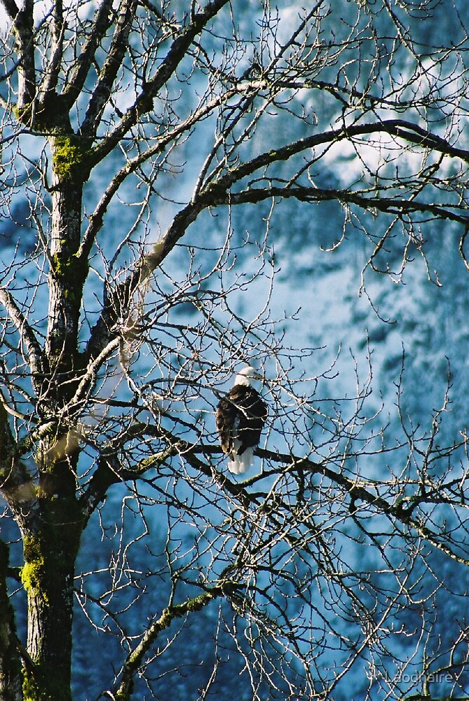 Eagle Eye by Laoghaire
