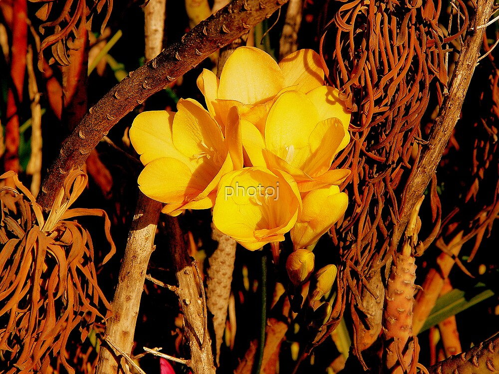photoj Seaside Flora by photoj