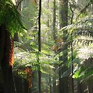 Fern light by phillip wise