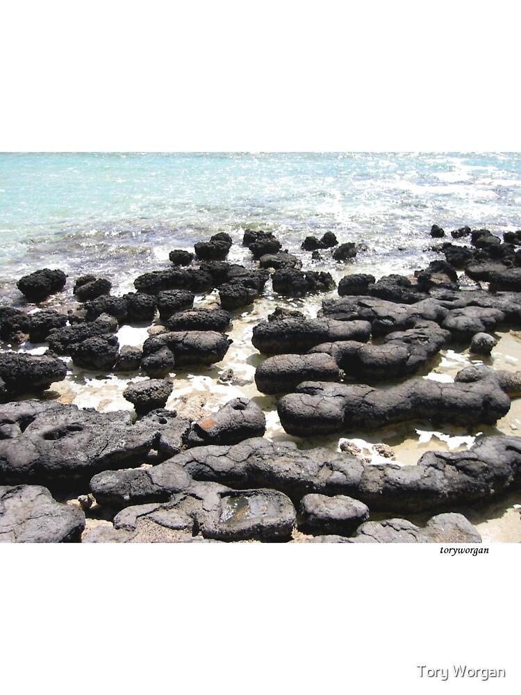 Stromatolites - Monkey Mia, WA by toryworgan