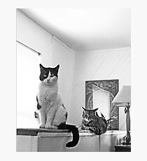 Cats In Position Photographic Print