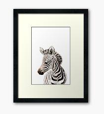 Zebra - peekaboo safari animals collection Framed Print