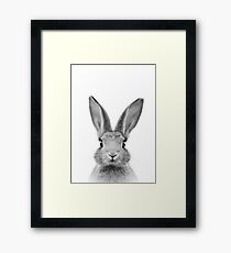 Baby Bunny, rabbit - peekaboo animals collection Framed Print